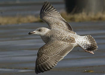 Another Bird Post | Everything is Permuted